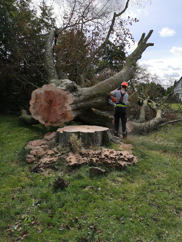 beskæring af træ2